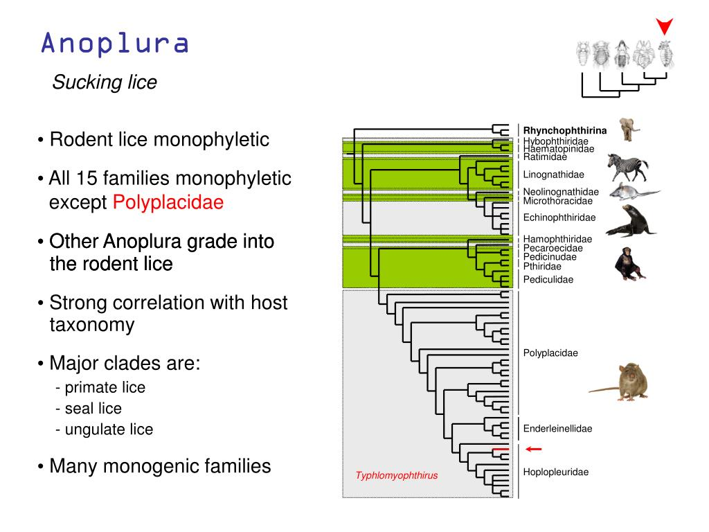 All 15 families monophyletic