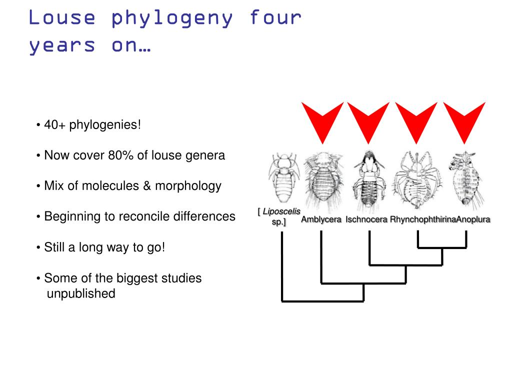Louse phylogeny four years on…