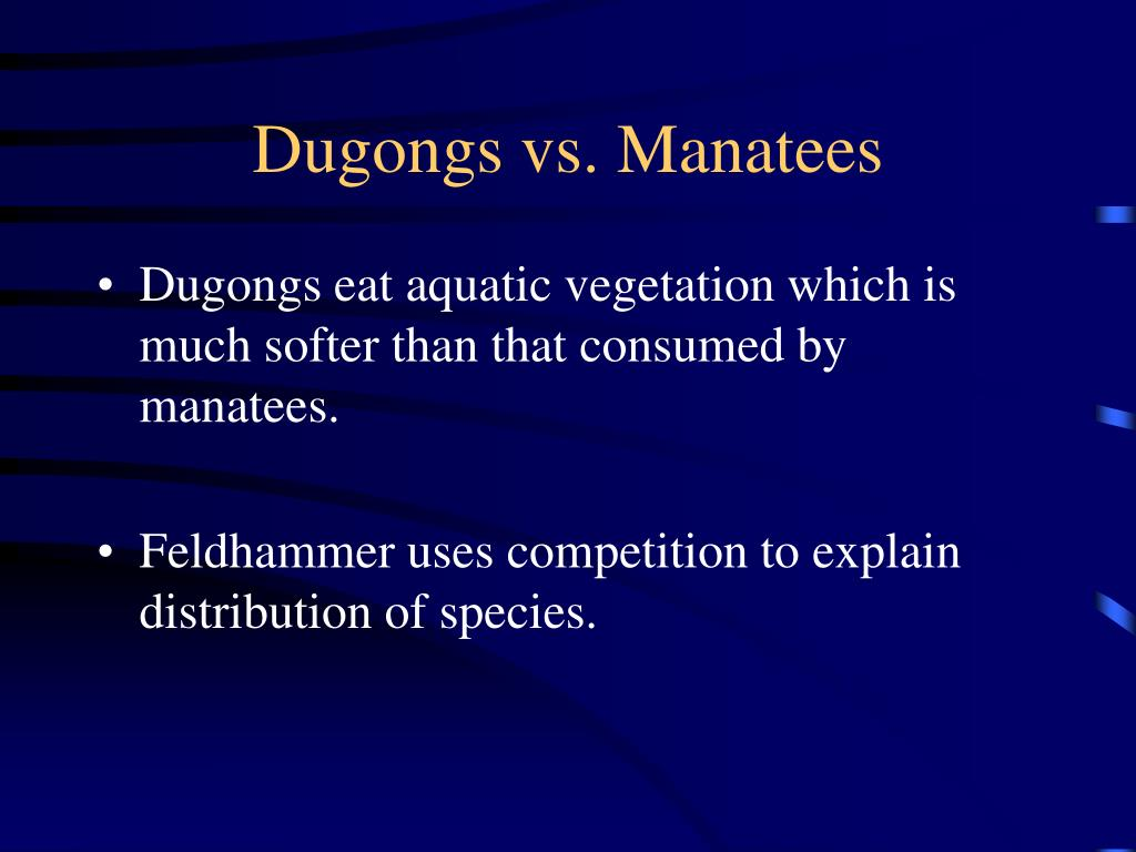 Dugongs vs. Manatees