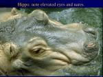 hippo note elevated eyes and nares