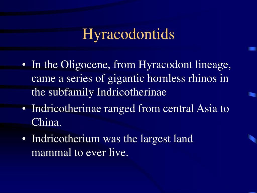 Hyracodontids