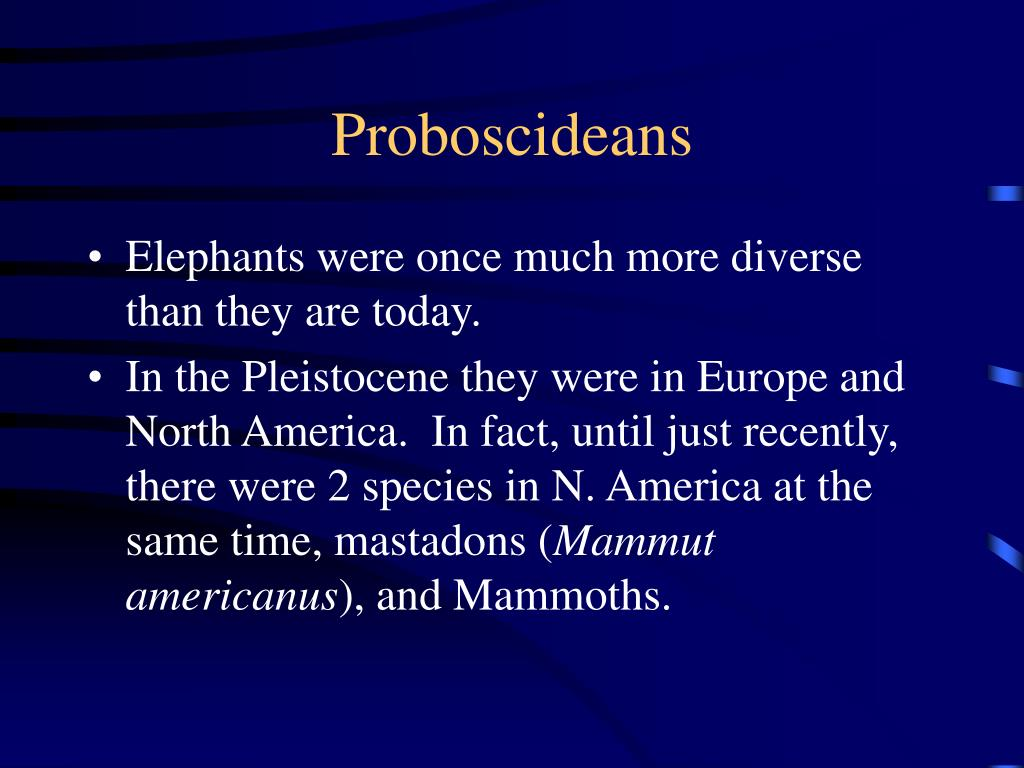 Proboscideans