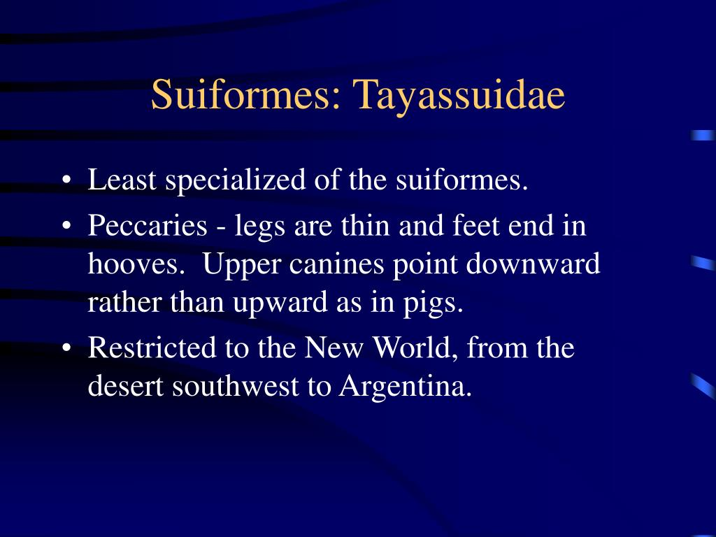 Suiformes: Tayassuidae