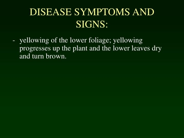 DISEASE SYMPTOMS AND SIGNS: