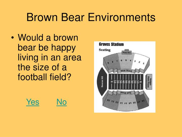 Brown Bear Environments