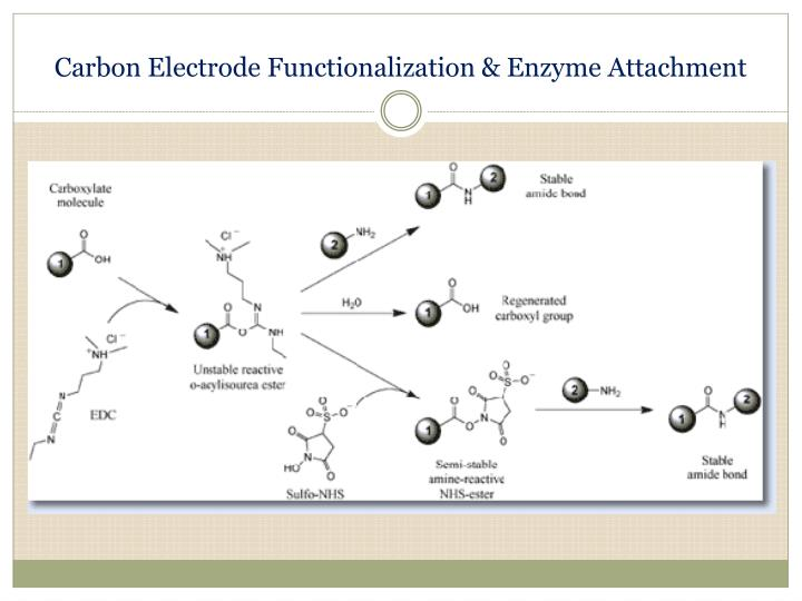 Carbon Electrode Functionalization & Enzyme Attachment
