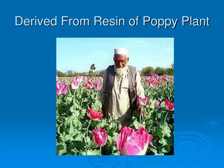 Derived From Resin of Poppy Plant