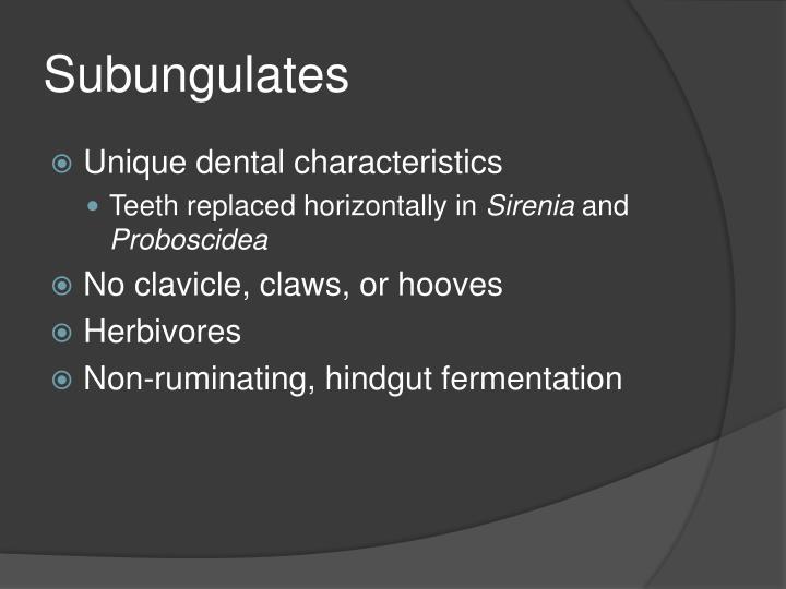 Subungulates