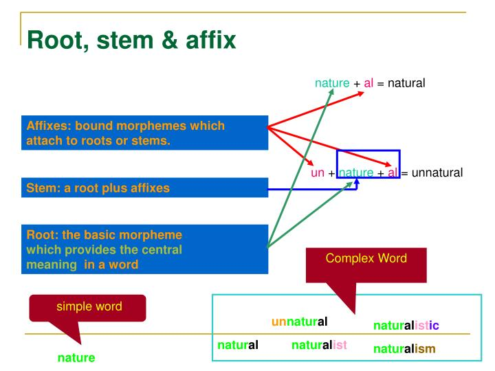 Root, stem & affix