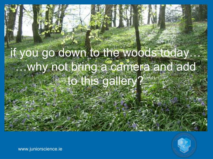 if you go down to the woods today…