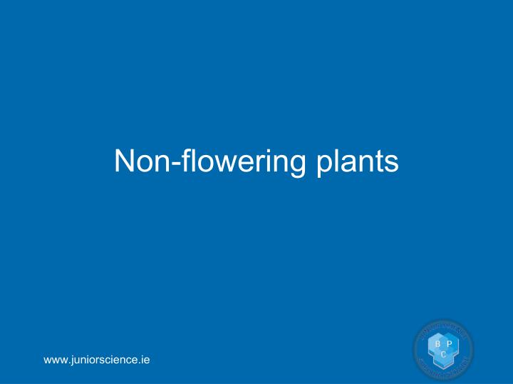 Non-flowering plants