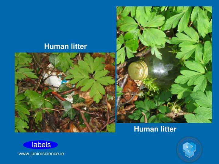 Human litter