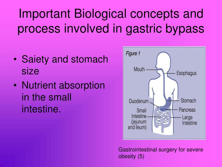Important Biological concepts and process involved in gastric bypass