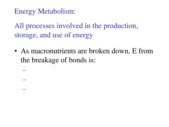 Energy Metabolism: