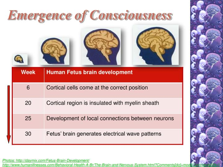 Emergence of Consciousness
