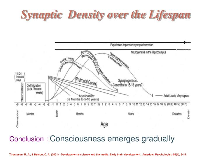 Synaptic  Density over the Lifespan