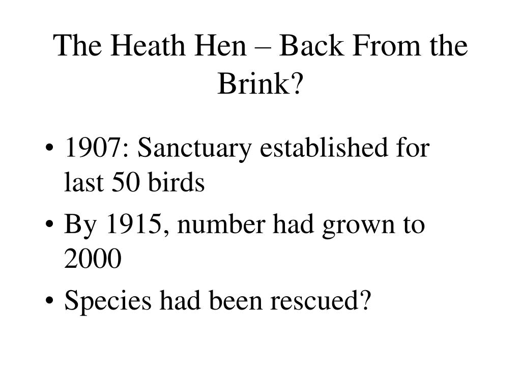 The Heath Hen – Back From the Brink?
