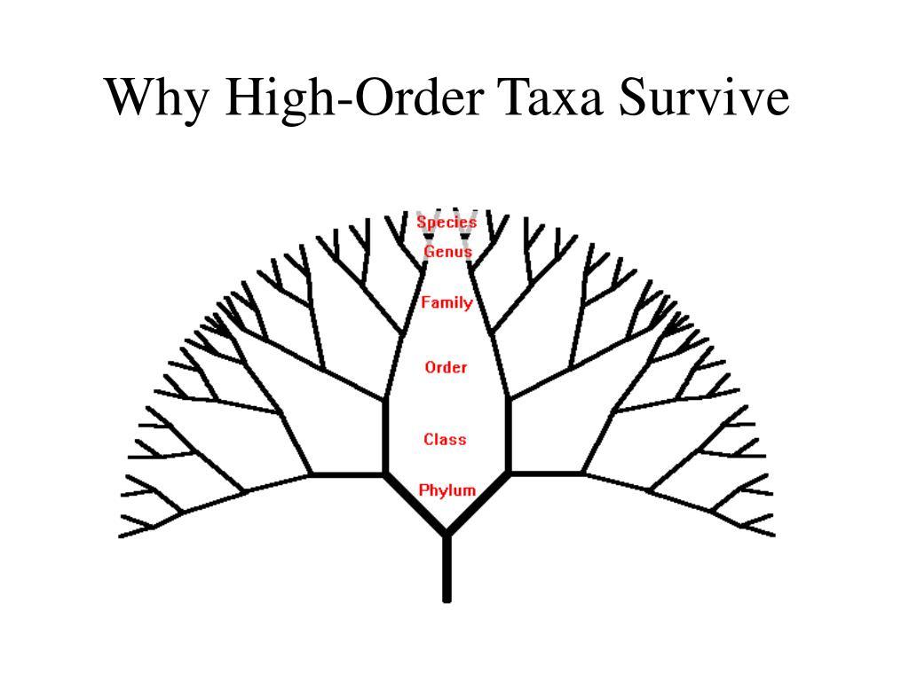 Why High-Order Taxa Survive