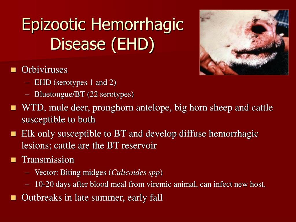 Epizootic Hemorrhagic
