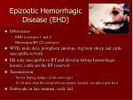 epizootic hemorrhagic disease ehd