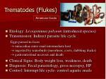 trematodes flukes
