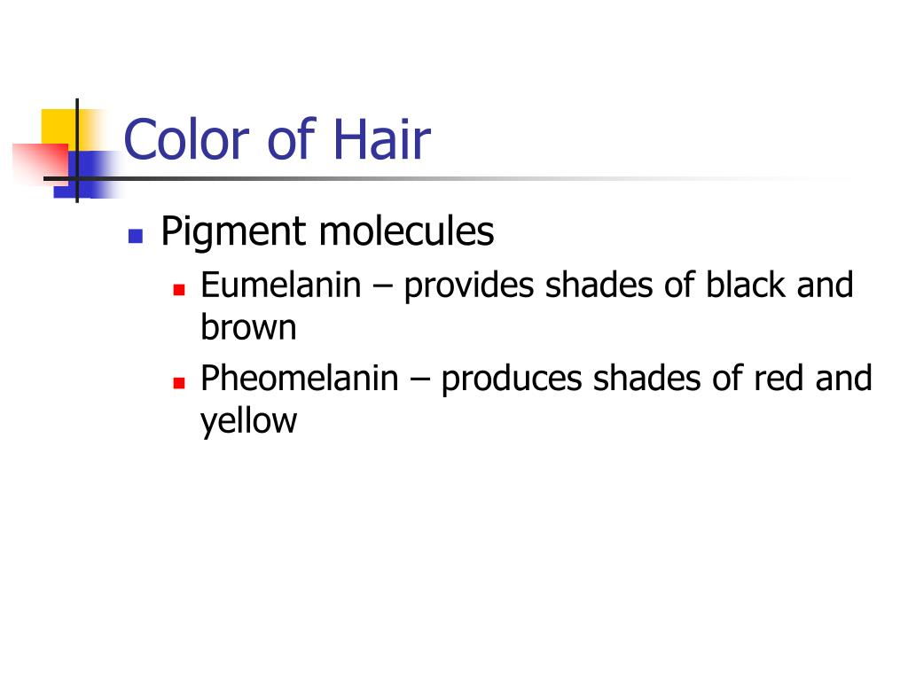 Color of Hair