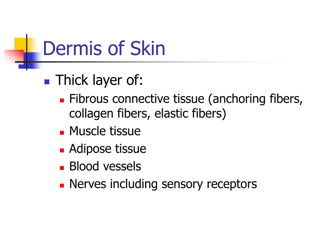 Dermis of Skin