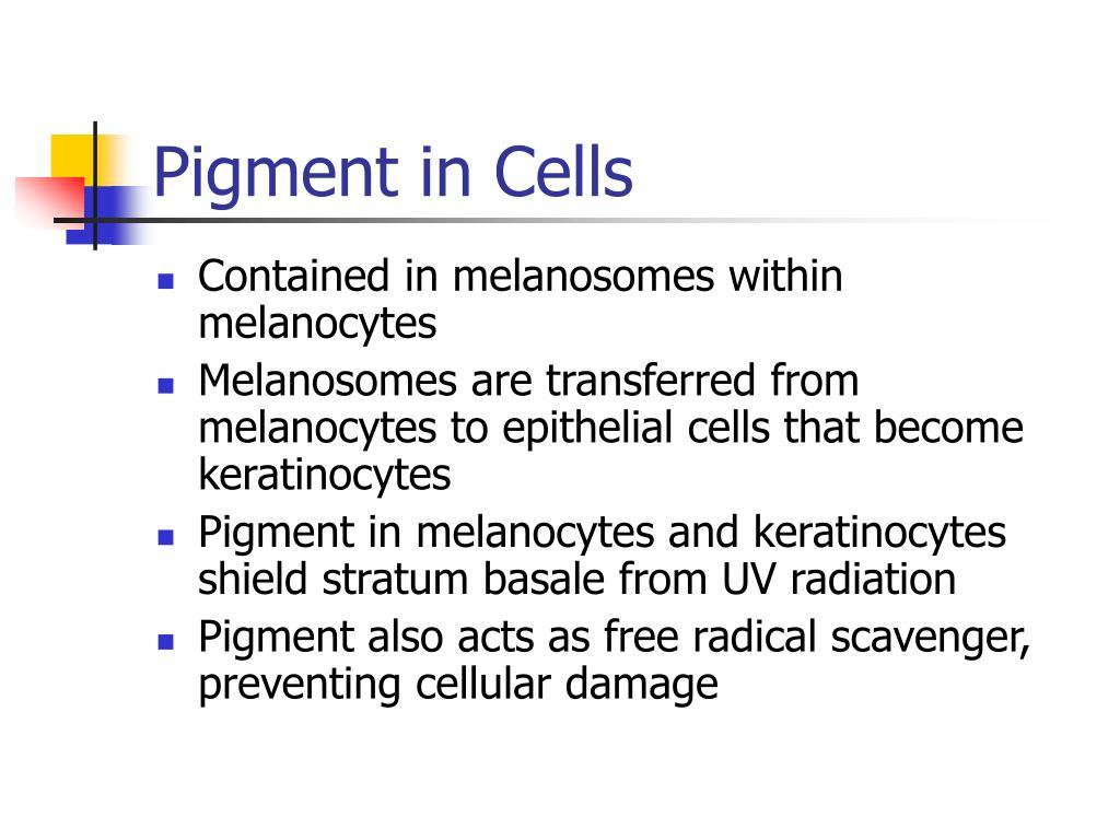 Pigment in Cells