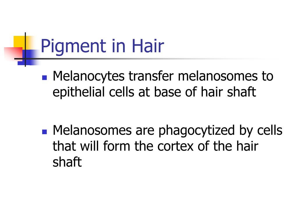 Pigment in Hair