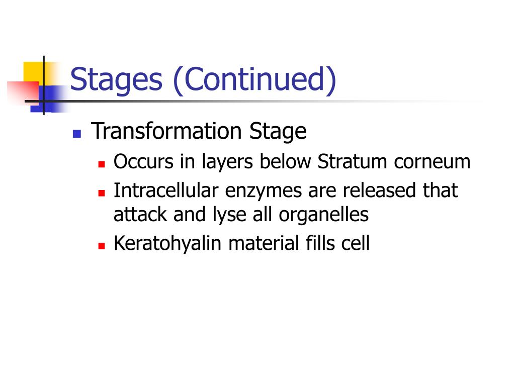 Stages (Continued)