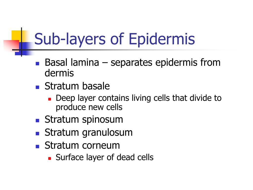 Sub-layers of Epidermis