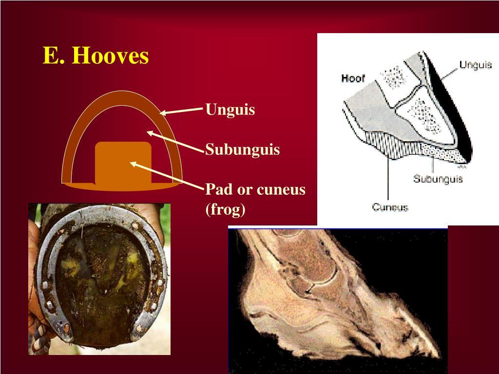 E. Hooves