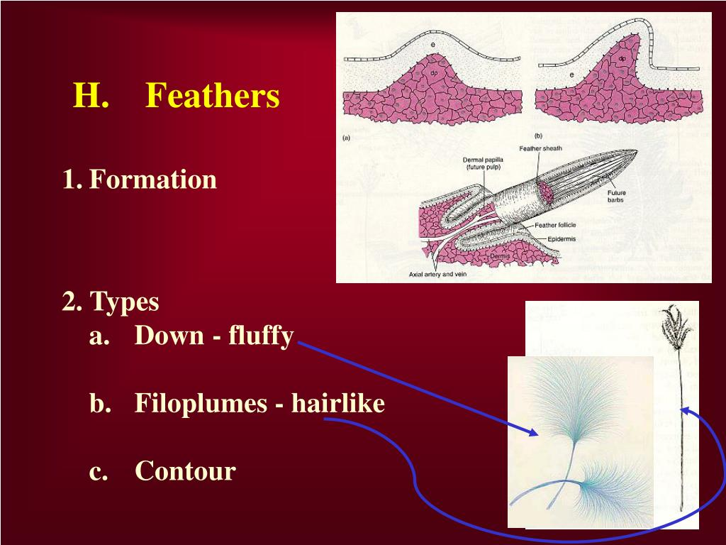 H.	Feathers
