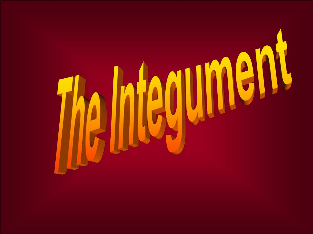 The Integument
