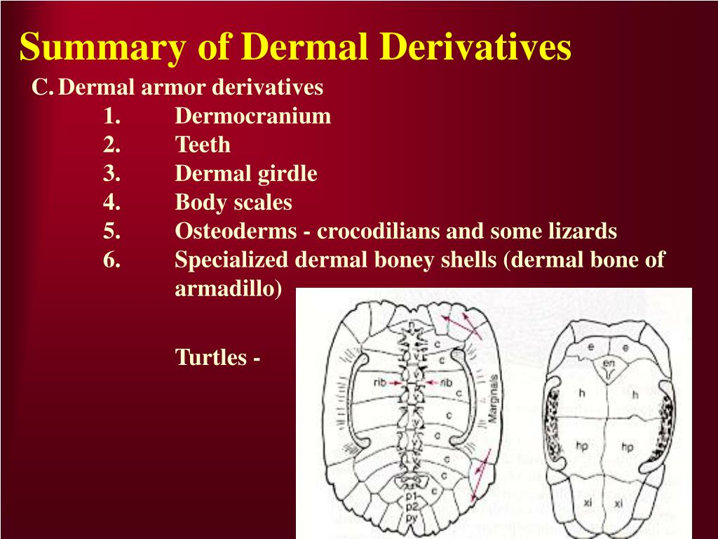 Summary of Dermal Derivatives