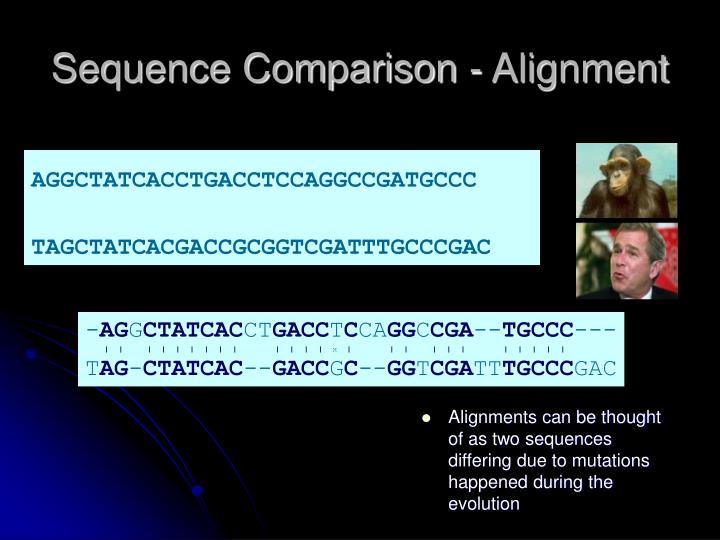 Sequence comparison alignment