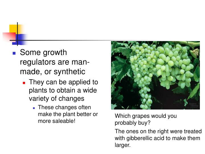 Some growth regulators are man-made, or synthetic
