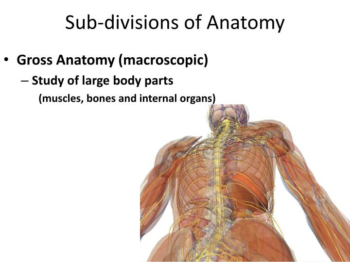 Sub divisions of anatomy