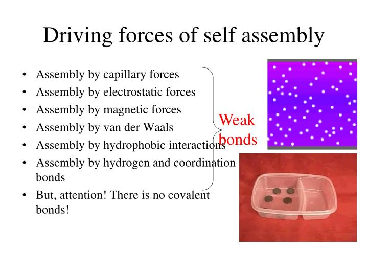 Driving forces of self assembly