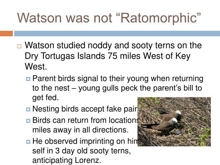 """Watson was not """"Ratomorphic"""""""