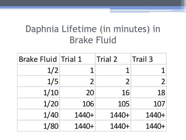Daphnia Lifetime (in minutes) in