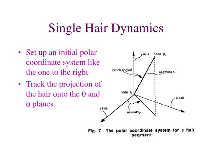 Single Hair Dynamics
