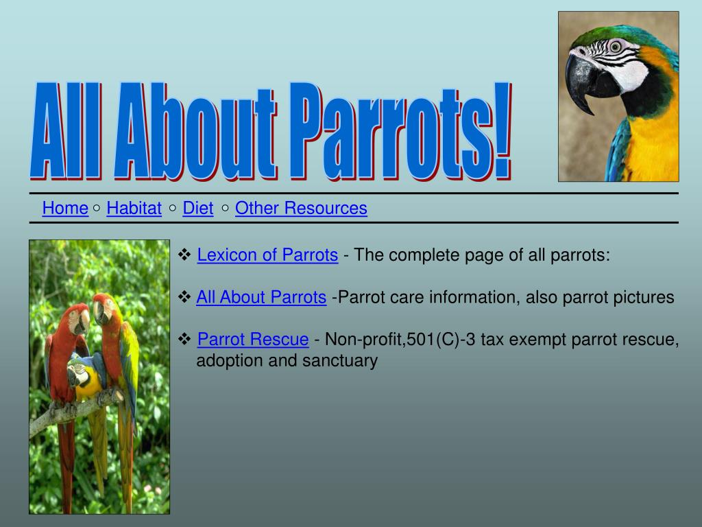 All About Parrots!