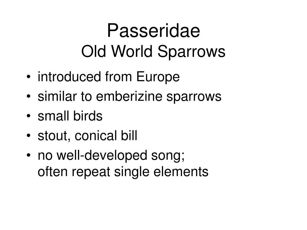 Passeridae