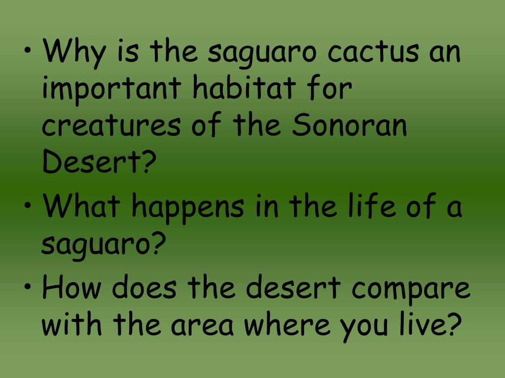 Why is the saguaro cactus an important habitat for creatures of the Sonoran Desert?