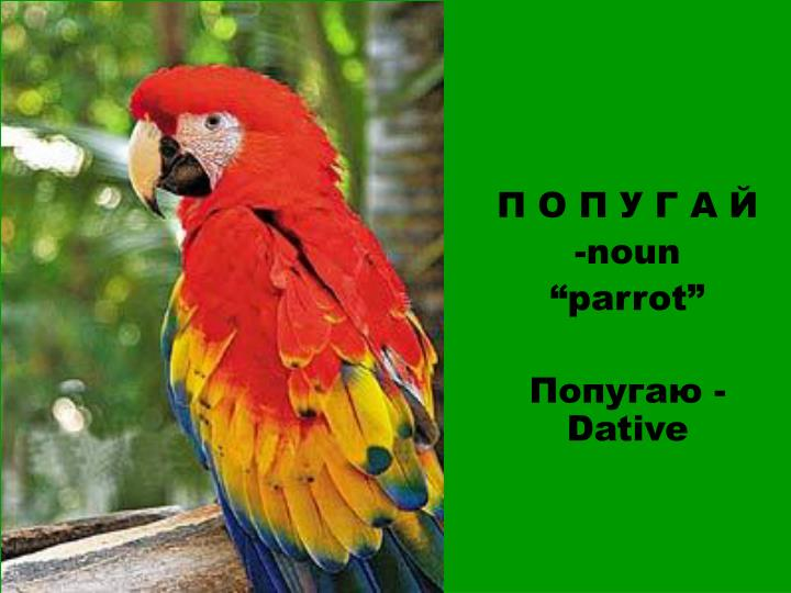 Noun parrot dative