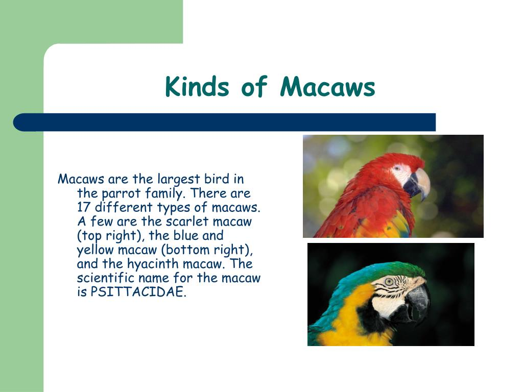 Kinds of Macaws