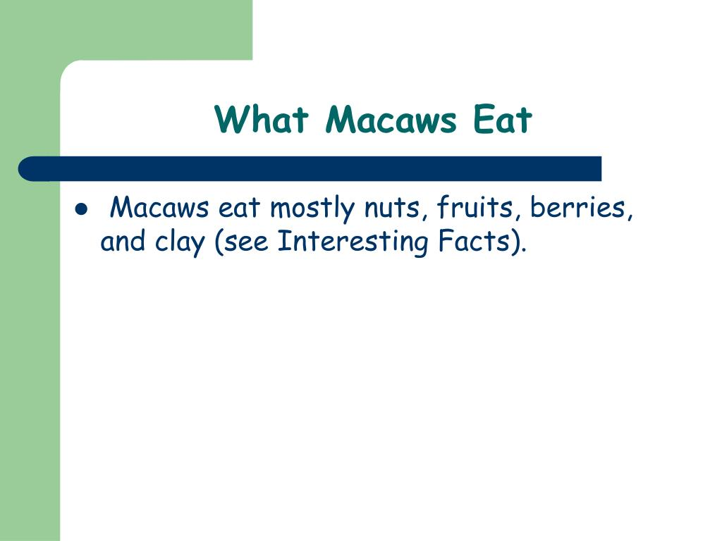 What Macaws Eat