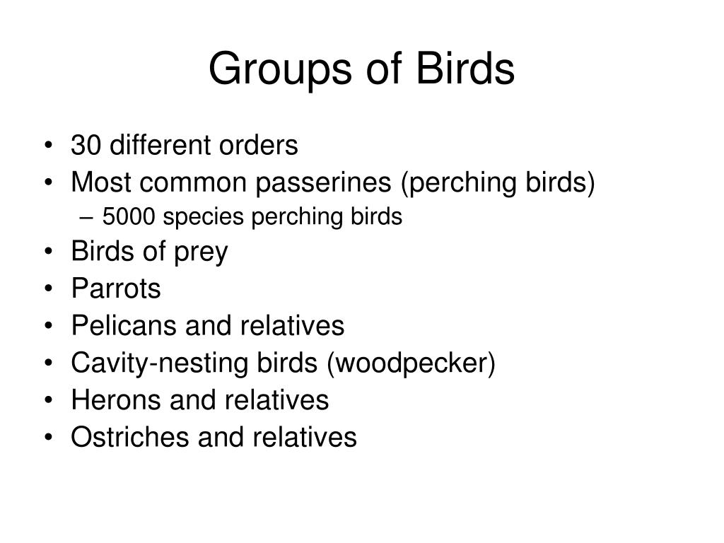 Groups of Birds