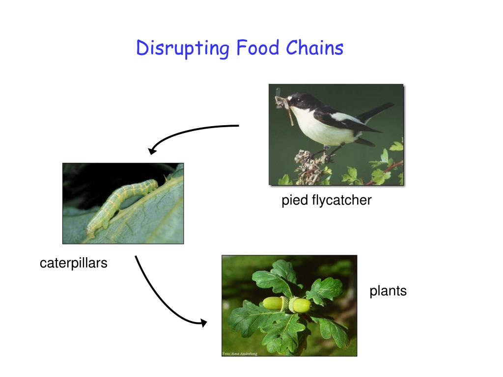 Disrupting Food Chains